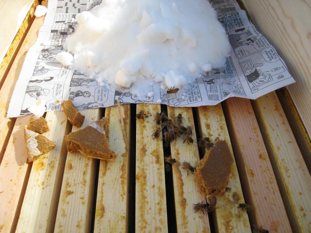 Feeding Sugar to my Honey Bees