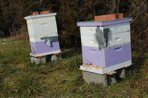 Hives at the Westover Apiary