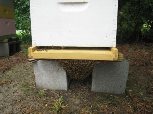 Swarm on Bottom Board